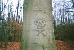 danger [disposable camera experiment] (ericgrhs) Tags: tree baum skull totenkopf wald forest woods winter trees disposablecamera einwegkamera singleusecamera laub foliage leaves