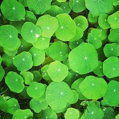 #green #patterns #bermuda #january (IslandZal) Tags: instagram ifttt