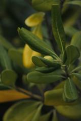 Green blur. (Xelart24) Tags: green darkgreen leaf leaves nature
