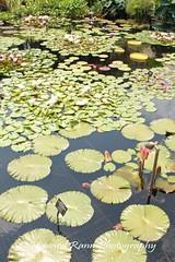 Longwood Gardens Summer 2017 (243) (Framemaker 2014) Tags: longwood gardens kennett square pennsylvania united states america