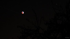 Blood moon with falling star (bdg-photography) Tags: bloodmoon blood moon eclipse full fullmoon red stars astrophotography trees