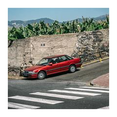 Funchal, Madeira (Sr. Cordeiro) Tags: funchal madeira portugal ilha island rua street carro car rover bananeiras bananatrees panasonic lumix gx80 gx85 14140mm