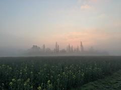 20190329 (Homemade) Tags: field morning sunrise spring farm countryside fog trees oxfordshire southoxfordshire wantage grove valeofthewhitehorse