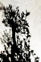 Sceadwe (一期一会一枚) Tags: nikon japan d4s lensid160 shadow bonsai crazygeniuses flickrsbest