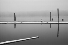 - At the docks XV(a) - (Tom Findahl) Tags: moskva 2 docks delta 400 water winter