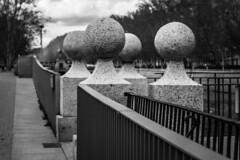 The fence of the bridge (Jose Rahona) Tags: friday puente bridge madridrio rio manzanares arboles trees blancoynegro blackandwhite bw monochrome fencefriday hff fence