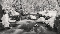 *Winteridylle am Wasserfall der Kleinen Kyll* (Albert Wirtz @ Landscape and Nature Photography) Tags: albertwirtz kleinekyll manderscheid eifel germany waterfall water rapids stromschnelle blackwhite schwarzweiss bw winter volcaniceifel albertwirtzlandschaftsundnaturfotografie albertwirtzphotography albertwirtzlandscapeandnaturephotography deutschland allemagne natura natur nature landscape paesaggi paysage paisaije campo campagna campagne rhénaniepalatinat rhinelandpalatinate rheinlandpfalz aufmerksamkeitspfad germanenbrücke verbandsgemeindewittlichland wittlichland blackandwhite monotone monoton wasserfall wasser movingwater wateronthemove winteridylle winterzauber wintermagic biancoenero skancheli