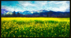 Calistoga Mustard (A Work of Mark) Tags: calistoga mustard digitalpainting color landscape layers photoshop topazimpressions aurorahdr