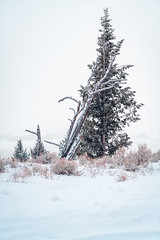 Simplicitree (Todd Danger Farr) Tags: tree snow whiteout wyoming sony a7rii nature teton