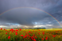Rainy Days (Nick Brundle - Photography) Tags: backgrounds denmark jutland landscape nature sky summer nikond750 gettyimages poppy poppies nikon2470mmf28 rainbow