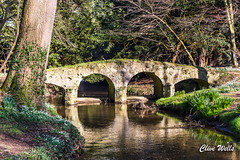 Bridge over stream at Wasingham Prrioy (wells117) Tags: galanthus walsinghampriory arches archways bridge flowers nature norfolk reflections river runningwater snowdrops spring stream trees walsingham water whiteflowers