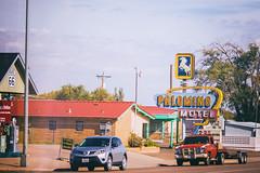 Palomino Motel (Thomas Hawk) Tags: america newmexico palominomotel route66 tucumcari usa unitedstates unitedstatesofamerica horse motel fav10