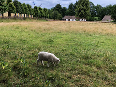 Sheep on the Farm in Denmark (` Toshio ') Tags: toshio denmark scandinavia sheep farm animal windmill trees field europe europeanunion iphone frilandmuseet lingby farmhouse
