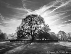 Tree, Rufford (Andy McDonald) Tags: trees england monochrome nottinghamshire blackwhite unitedkingdom rufford sky places clouds