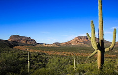 Happy Holidays (Buck--Fever) Tags: arizona arizonaskies arizonadesert gilariverarizona cochranarizona cochranroad saguaros saguaro landscape cactus nature mountain bluesky blue desert canon60d tamron18400lens centralarizona florencearizona florencekelvinhighway