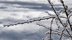 Ice (Luckyquebec) Tags: ice glace quebec tree plant