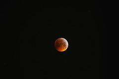 01_Super_Wolf_Blood_Moon_Eclipse_01_19 (Marcus.Ghil) Tags: lunarossa superluna superwolfbloodmoon wolfmoon supermoon