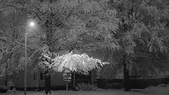 Streetlight (Tim @ Photovisions) Tags: xt2 snow fuji nebraska beatrice fujifilm monochrome light blackandwhite street corner night gagecounty