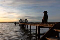 eddie sit (VI) (bkellerstrass) Tags: see lake ammersee hund dog steg pier private sit stairs holz bootssteg holzsteg himmel wolken abendstimmung sunset