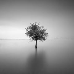 Alone VII (ilias varelas) Tags: water sky square atmosphere blackandwhite bw nature mood mono monochrome mist light landscape longexposure greece