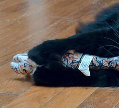 Batman's polydactyly (rootcrop54) Tags: batman paws extratoes polydactyl polydactyly hemingway black tuxedo mittens neko macska kedi 猫 kočka kissa γάτα köttur kucing gatto 고양이 kaķis katė katt katze katzen kot кошка mačka gatos maček kitteh chat ネコ cc100 cc1000 explore cc6000
