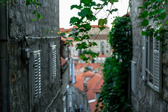 Dubrovnik-red-rooftops-narrow-streets.jpg (yobelprize) Tags: oldcity spring foliage nature yobelmuchang city windows stones red morning plant alleyway oldtown architecture environment narrow foliagebackground medieval old brick dubrovnik croatia light garden alley tiles historical closeup beautiful dangling house decoration leaf green outdoors yobel rooftops tree