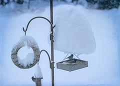 Winter Birds (Colormaniac too - Many thanks for your visits!) Tags: snowfall snow winter february recordbreakingsnow birds birdfeeder oregonjunco sequim olympicpeninsula washingtonstate pacificnorthwest topazstudio netartll hss