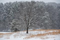 quabbinreservoir2019-97 (gtxjimmy) Tags: nikond7500 nikon d7500 winter snow quabbinreservoir swiftriver ware belchertown massachusetts watersupply newengland quabbin