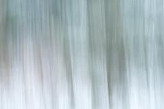 snow in the wood. (buntehof) Tags: snow bos woods veluwe movement beweging bomen