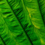 Leaf by Phil Luck