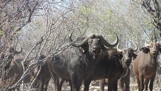 Namibia Dangerous Game Safari - Caprivi Strip 123