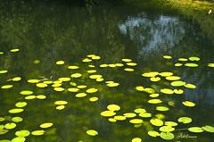 """""""Un corazón en el agua"""" (Adrit fotografías) Tags: amor love corazón heart agua water verde green valentines day valentinesday❤"""