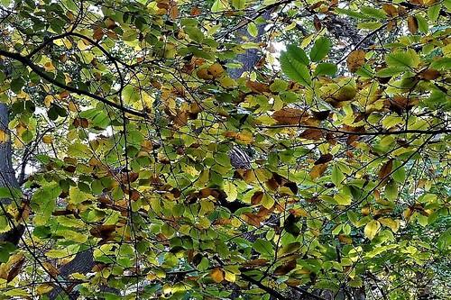 {Autumn Quilt}FCC171