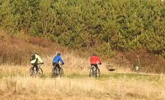 Caution : Roadrunner Ahead !! (Gilli8888) Tags: nikon p900 coolpix northumberland cambois people beach camboisbeach sand coast coastal sea seaside cyclists bikes three roadrunner trees mountainbikes colours