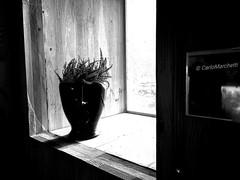 """The wait"" (carlomarchetti62) Tags: carlomarchetti photography art artstudio room dream empathy freedom feel fly home heart intothewild infinity insideout love light life lifestyle nature present transformation world bnwworkers bnwartstyle bnwplanet2018 bnw bnwaddiction bnwitalian blackandwhite"