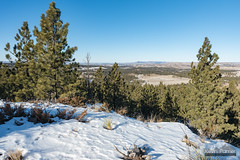 North of Yager (kevin-palmer) Tags: custernationalforest ashland montana december winter snow sunny blue sky nikond750 tamron2470mmf28 yagerbutte hills scenic view afternoon pine trees yucca
