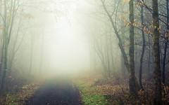 Eifel Lights (Netsrak) Tags: baum bäume eu eifel europa europe forst landschaft natur nebel rheinland rhineland wald fog forest mist nature trees winter woods