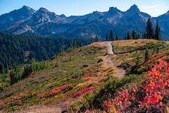 Alta Vista Trail (Laura Jacobsen) Tags: mountains mtrainier mtrainiernationalpark washington
