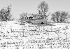 Frozen in Time (dshoning) Tags: 52weeksof2019 bus field corn stalks snow march iowa