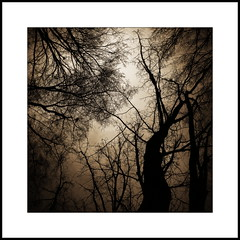 greeting the sun (luci_smid) Tags: trees branches impression sepia monochrome