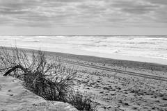 Plage de Saint-Trojan (yannfourel) Tags: plage sainttrojan oléron littoral sable côte mer océan charentesmaritimes île 17 monochrome nikon d7500