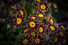 Colours and light ... (Julie Greg) Tags: flower flowers colours garden details canon nature nautre