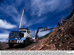 "Logging Truck 02 (hoffman) Tags: arboriculture bc britishcolumbia canada clearcut clearcutting countryside crane deforestation felling forestry haulage haulier hauling horizontal industry island labor lifting load loading logging logs lorry lumber nature outdoors road timber track tractor trailer transport trees truck trucking trunk vancouver vancouverisland vehicle wood woodlands work yarder 181112patchingsetforimagerights davidhoffman wwwhoffmanphotoscom portalberni davidhoffmanphotolibrary socialissues reportage stockphotos""stock photostock photography"" stockphotographs""documentarywwwhoffmanphotoscom copyright"