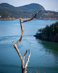 Seaside Twist (s.d.sea) Tags: pentax k5iis washington washingtonstate wa pnw pacificnorthwest outdoors tree twist twisty bay view cliff anacortes pacific ocean sound old dead stick bend