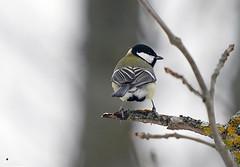 Ågestasjön - Januari 2019 (Hamza Küçükgöl) Tags: wwwhkfoto82wixcomhkfoto hkfoto hamza hamzakucukgöl hamzakucukgol hamzaküçükgöl kücükgöl kucukgöl küçükgöl kucukgol hkcine vinter vr fullframe ff fåglar bokeh birds ågestasjön sverige stockholm sweden sony sonyambassador a9 sonya9 400f28 400mmf28 400mmf28fl 400gmaster kus kuslar bird color cold city natur nature wild wildlife winter