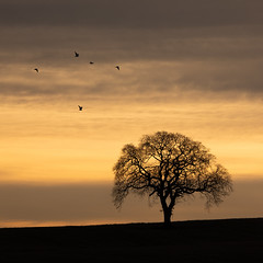 Lonely Sunrise (PeskyMesky) Tags: aberdeen aberdeenshire potterton tree sunrise sunset silhouette nature red scotland sky canon canon5d eos