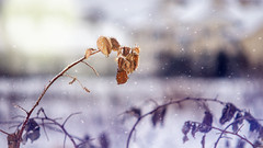 winter (andygus1) Tags: frost season ice snow background cold nature outdoor beautiful white tree winter natural frosty freeze detail bright snowflake icy weather frozen flakes light hoar leaf blue beauty color ярославль россия