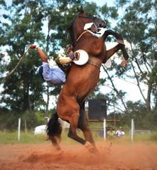 Luciano Rojas e Apocalipse (Eduardo Amorim) Tags: gaúcho gaúchos gaucho gauchos cavalos caballos horses chevaux cavalli pferde caballo horse cheval cavallo pferd pampa campanha fronteira quaraí riograndedosul brésil brasil sudamérica südamerika suramérica américadosul southamerica amériquedusud americameridionale américadelsur americadelsud cavalo 馬 حصان 马 лошадь ঘোড়া 말 סוס ม้า häst hest hevonen άλογο brazil eduardoamorim gineteada jineteada