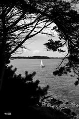 Vacances dans le Morbihan - Bretagne (S@titi) Tags: morbihan bretagne lileauxmoines ileauxmoines portblanc noiretblanc blackandwhite satiti