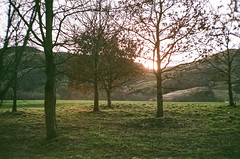 0096_23 (www.cjo.info) Tags: 35mm boots boots200colourprint canon canon50mmf12 edinburgh europe europeanunion holyroodpark leical39mount scotland unitedkingdom voigtlander voigtlanderbessar westerneurope againstthelight analogue backlighting backlit blur bokeh contrejour film flora focusblur landscape manualfocus plant rangefinder screwmount shallowdepthoffield tree wood woodland woods